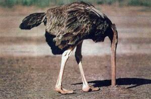 ostrich large