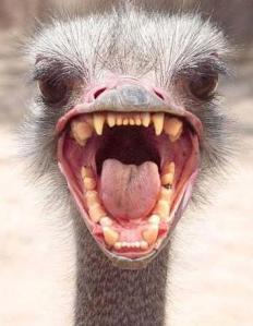 ostrich_head - gross