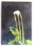 encaustic cala plant 004