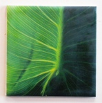 encaustic leaf