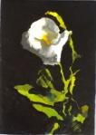 Cala #3  plant c 001-blog