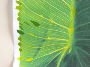 Lily leaf photo for collor checks