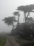 3 trees in fog