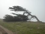 bent tree on bluff