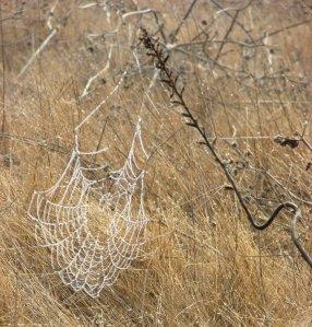 dewy web $ weed-cor-crop