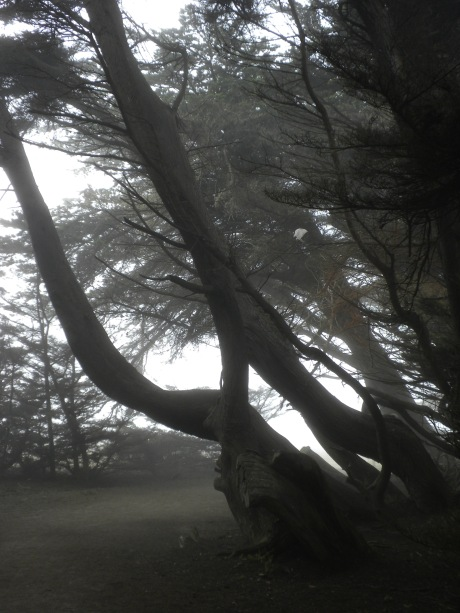 in a foggy tree grove