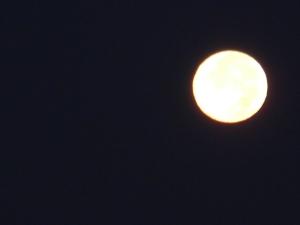 moon shots 047