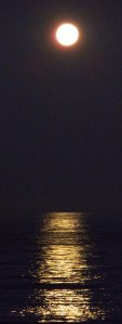 moonset 030 dk cu-narrow